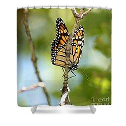 Monarch Shower Curtain by Lori Tordsen