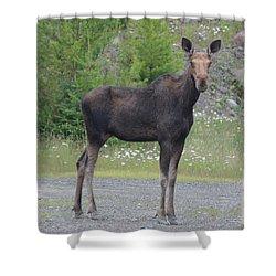 Moose Shower Curtain by James Petersen
