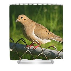 Morning Dove I Shower Curtain by Debbie Portwood