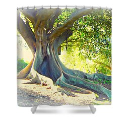 Morton Bay Fig Tree Shower Curtain