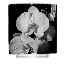 Moth Orchid Bw Shower Curtain