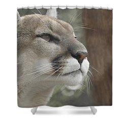 Mountain Lion Shower Curtain by Ernie Echols