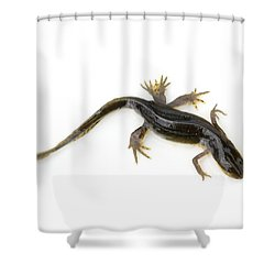 Mutated Eastern Newt Shower Curtain by Lawrence Lawry