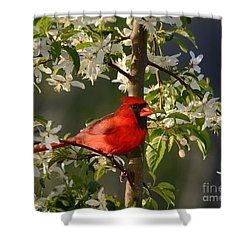 Red Cardinal In Flowers Shower Curtain