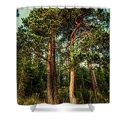 Northern Forest  Shower Curtain by Jenny Rainbow