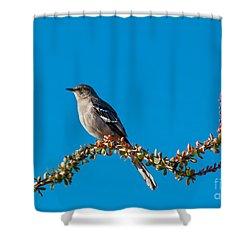 Northern Mockingbird Shower Curtain by Robert Bales