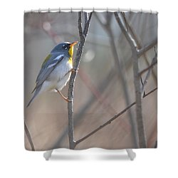 Northern Parula Shower Curtain by James Petersen