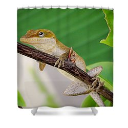 On Guard Shower Curtain by TK Goforth