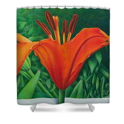 Orange Lily Shower Curtain by Pamela Clements
