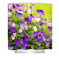 Pansies Shower Curtain by Elena Elisseeva