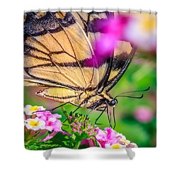 Shower Curtain featuring the photograph Papilio Glaucus by Rob Sellers