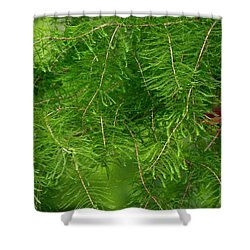 Shower Curtain featuring the photograph Peek A Boo by Elizabeth Winter