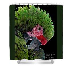 Pensive Parrot Shower Curtain