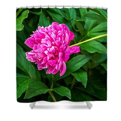 Peony Shower Curtain by Steve Harrington