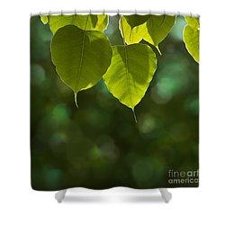 Pho Or Bodhi Shower Curtain by Atiketta Sangasaeng