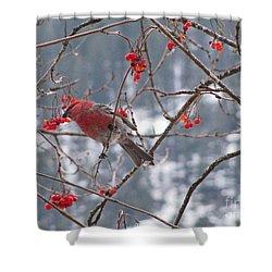 Pine Grosbeak And Mountain Ash Shower Curtain
