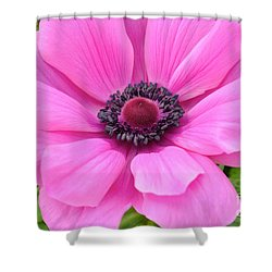 Shower Curtain featuring the photograph Pink Flower by Jeannie Rhode