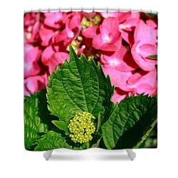 Pink Hydrangea Shower Curtain by Gaspar Avila