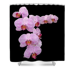 Pink Orchids Shower Curtain by Tom Prendergast