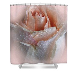 Pink Rose2 Shower Curtain