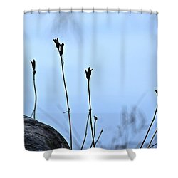 Pods On Pond Shower Curtain