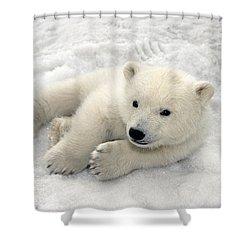 Polar Bear Cub Playing In Snow Alaska Shower Curtain by Mark Newman