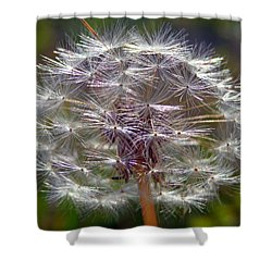 Shower Curtain featuring the photograph Poof by Joseph Skompski