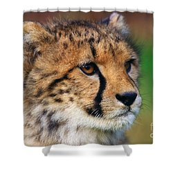 Portrait Of A Cheetah Cub Shower Curtain by Nick  Biemans