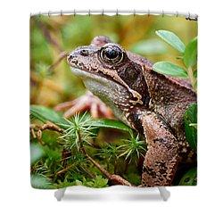 Portrait Of A Frog Shower Curtain by Jouko Lehto