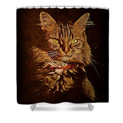Portrait Of A Tramp Cat Shower Curtain