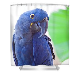 Shower Curtain featuring the photograph Posie by Roselynne Broussard