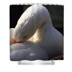 Preening Goose Shower Curtain