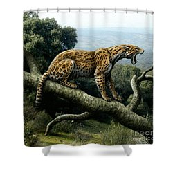 Promegantereon Sabretooth Cat Shower Curtain by Mauricio Anton