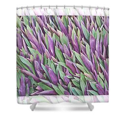 Shower Curtain featuring the photograph Purple And Green by Holly Kempe