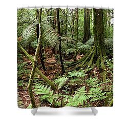 Rain Forest Shower Curtain by Les Cunliffe