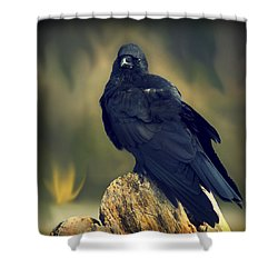 Shower Curtain featuring the photograph Raven by Yulia Kazansky