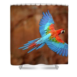 Red And Green Macaw Flying Shower Curtain by Pete Oxford