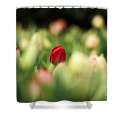 RED Shower Curtain by Darren Fisher