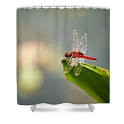 Red Dragonfly Shower Curtain by Ulrich Schade