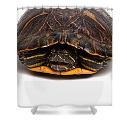 Red-eared Slider Shower Curtain