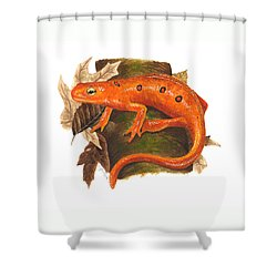 Red Eft Shower Curtain by Cindy Hitchcock