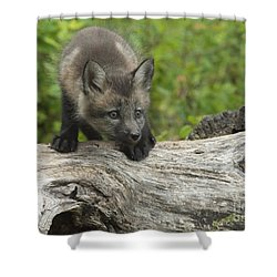 Red Fox Kit Shower Curtain by Sandra Bronstein