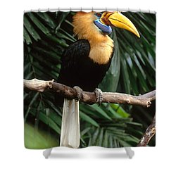 Red-knobbed Hornbill Shower Curtain