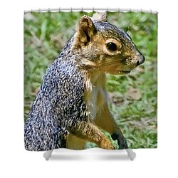 Red Squirrel Shower Curtain by Bob and Nadine Johnston