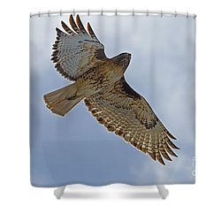 Red-tail Hawk #3094 Shower Curtain by J L Woody Wooden