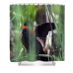 Red-winged Blackbird Shower Curtain by Steven Ralser