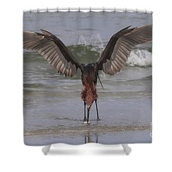 Reddish Egret Fishing Shower Curtain
