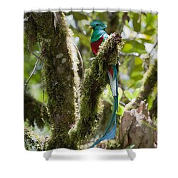 Shower Curtain featuring the photograph Resplendent Quetzal Male Costa Rica by Konrad Wothe