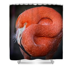 Resting Flamingo Shower Curtain