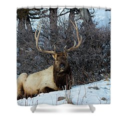 Rocky Mountain Elk Shower Curtain